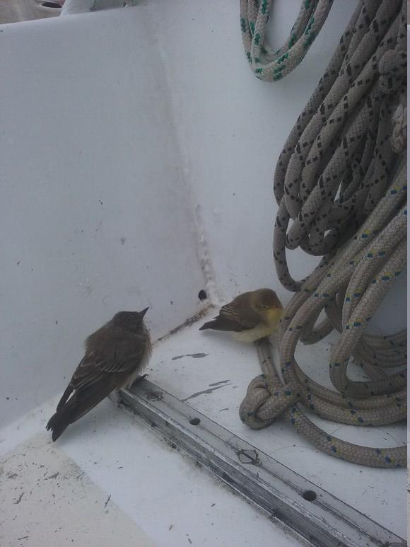 Gris et jaune côte à côte