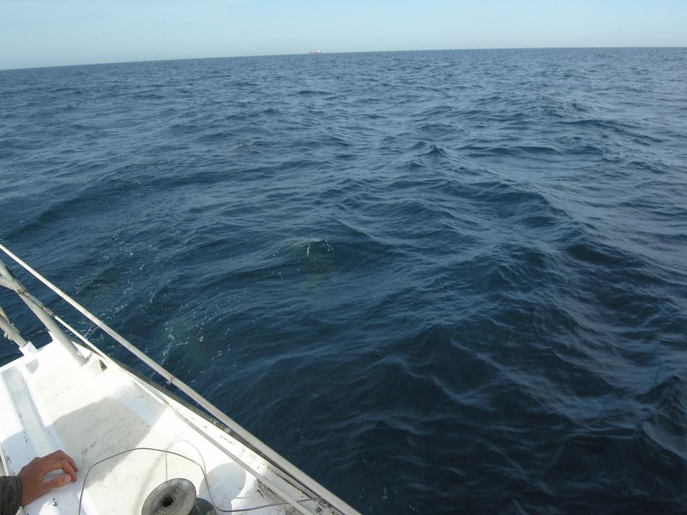 Si, là, sous l'eau, regardez!